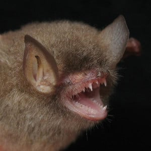 20 funny bat pictures