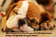 dog-sleep-quotes-wallpapers.jpg (1024×683) More