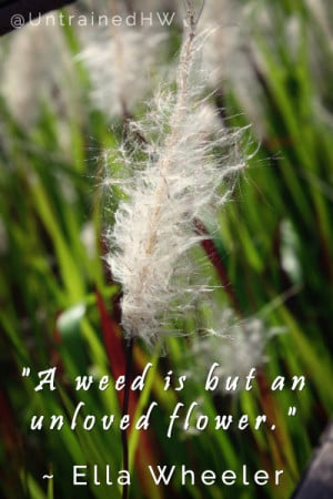 "weed is but an unloved flower."" ~ Ella Wheeler Wilcox"