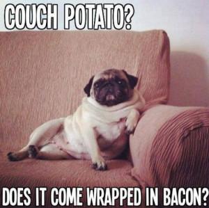 Couch Pugtato Funny Pug Meme