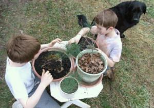 Nathan and William planting bonsai