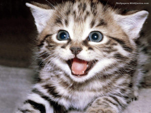 Cute Cats Wallpapers 51