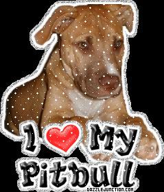 pitbull quotes - Google Search