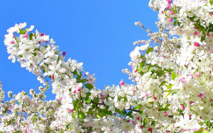 Happy Spring! 15 Favorite Quotes About Spring, Flowers Galore, and ...