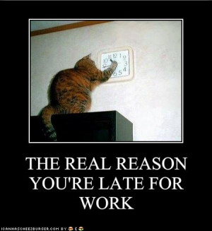 funny animals at work