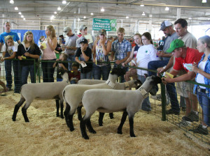 Youth try their hand at judging beef, sheep, swine and meat goats at ...