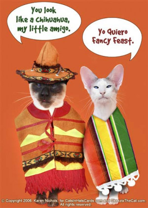 happy cinco de mayo to evrybuddy i don t reely know whut cinco de mayo ...