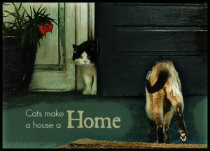 cat-quotes-garden-weed-flower , cats-begging-herding-behavior , cats ...