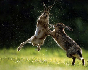 Funny Rabbit (51)