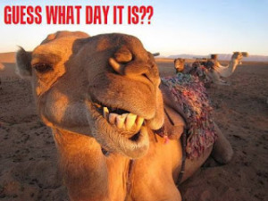 Almost gone, but hump day it was.