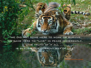 Tiger Reflecting Green Eyes pamela quote