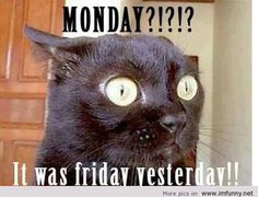 monday funny hate monday quotes, felin funni, animals, funny quotes ...