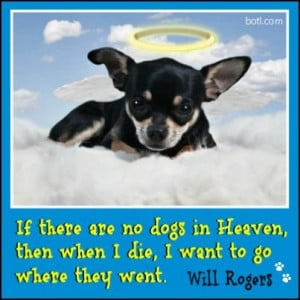 Will Rogers quote #dogs #heaven #die #will rogers