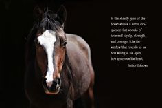 In the steady gaze of a horse shines a silent eloquence that speaks of ...