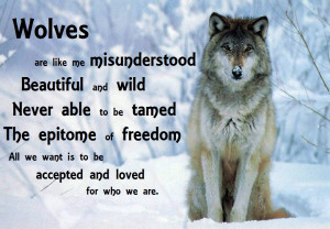 Wolves are like me misunderstood Beautiful and wild