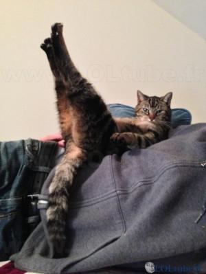 drole-de-position-pour-un-chat.jpg