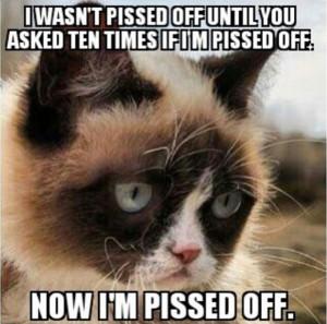Grumpy Cat at Work | GRUMPY CAT