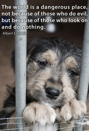 ... Cruelty, Animal Abuse, Albert Einstein Quotes, Shelters Dogs, Puppies