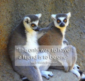 Famous Quotes on Friendship (15 Photos)