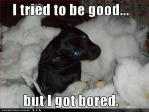 Funny Dog Pictures with Funny Quotes