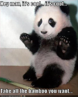 funny-animal-pictures-panda-bears