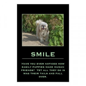 ... Posters on Smile Inspirational Poster With Cute Shih Tzu Dog Poster