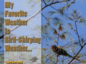 weather is bird chirping weather loirc hartwould spring quote