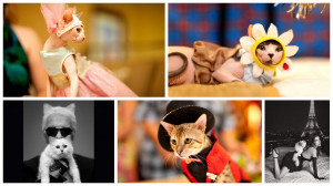 Cats in Fashion, Choupette to Hello Kitty