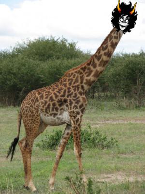 Funny Fat Giraffe Real...