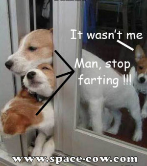 Funny Pictures Of People Farting Stop farting - funny dogs
