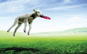 Funny Sheep | Wallpapers Design