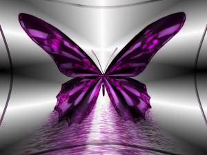 Butterflies Beautiful Butterflies