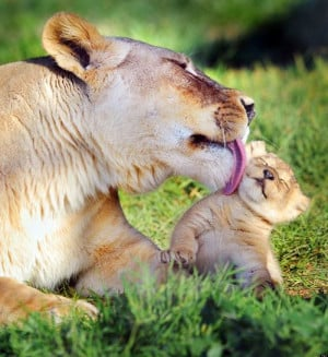 ANIMAL-MOTHERS-facebook.jpg
