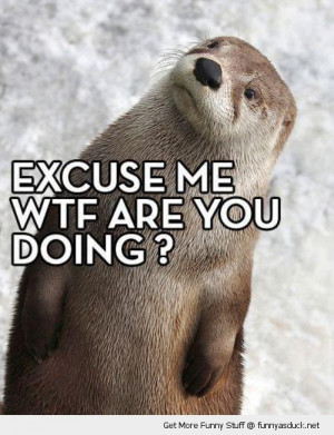 excuse me otter confused shocked animal funny pics pictures pic ...