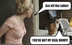 Cute cat pictures funny sayings