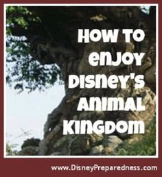 Animal Kingdom | Disney Preparedness - For Disney travel quotes ...
