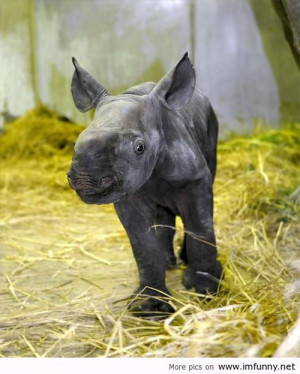 Rhino baby / Funny Pictures, Funny Quotes – Photos, Quotes, Images ...