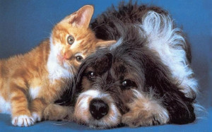So Sweet – Pictures of Cats and Dogs