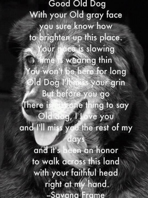 Good Old Dog With Your Old Gray Face You Sure Know How To Brighter Up ...