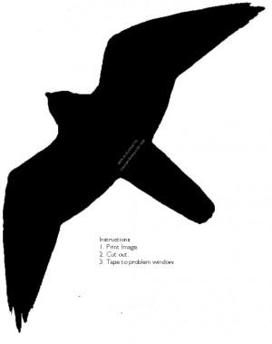 Bird Silhouette Stfranciswildlife Saver