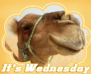 Its Wednesday