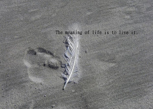 Feather Print Quote Photograph