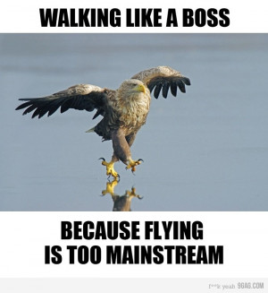Walking like a boss because flying is too mainstream.