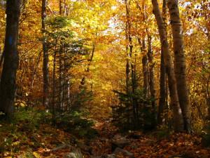 Peak season of fall foliage, Camel's Hump State Park, Vermont.