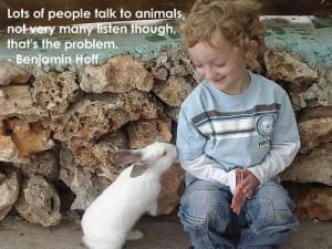 Boy rabbit quotes