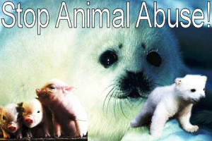 ... stop-animal-abuse/][img]http://www.imagesbuddy.com/images/153/stop