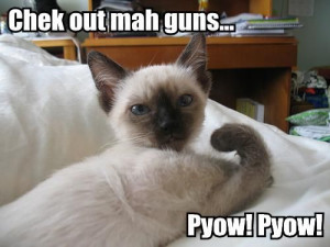 mean cats | MEAN CAT SAYINGS