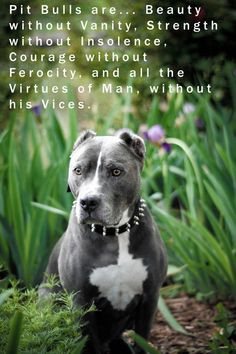 Pit bulls... must be defended from bad press that was created by cruel ...