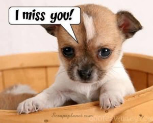 Cute Dog Image - I Miss You!