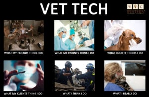 Funny Vet Tech Quotes Western veterinary conference